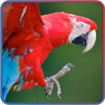 Animal Jigsaw Puzzle for Kids and toddlers APK
