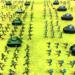 Battle Simulator World War 2 – Stickman Warriors APK