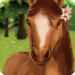 HorseHotel – Care for horses APK