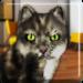 Talking Cat Funny APK