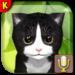 Talking Kittens virtual cat that speaks, take care APK