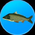 True Fishing. Fishing simulator APK