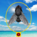 Fly & Swatter APK