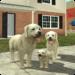 Code Triche Simulateur de chien en ligne  – Ressources GRATUITS ET ILLIMITÉS (ASTUCE)