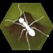Code Triche Finally Ants  – Ressources GRATUITS ET ILLIMITÉS (ASTUCE)