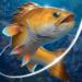 Code Triche Fishing Hook  – Ressources GRATUITS ET ILLIMITÉS (ASTUCE)