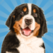 Dog Town- My Pet Simulator 3D APK
