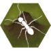 Finally Ants APK