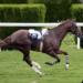 Code Triche Derby Horse Quest  – Ressources GRATUITS ET ILLIMITÉS (ASTUCE)